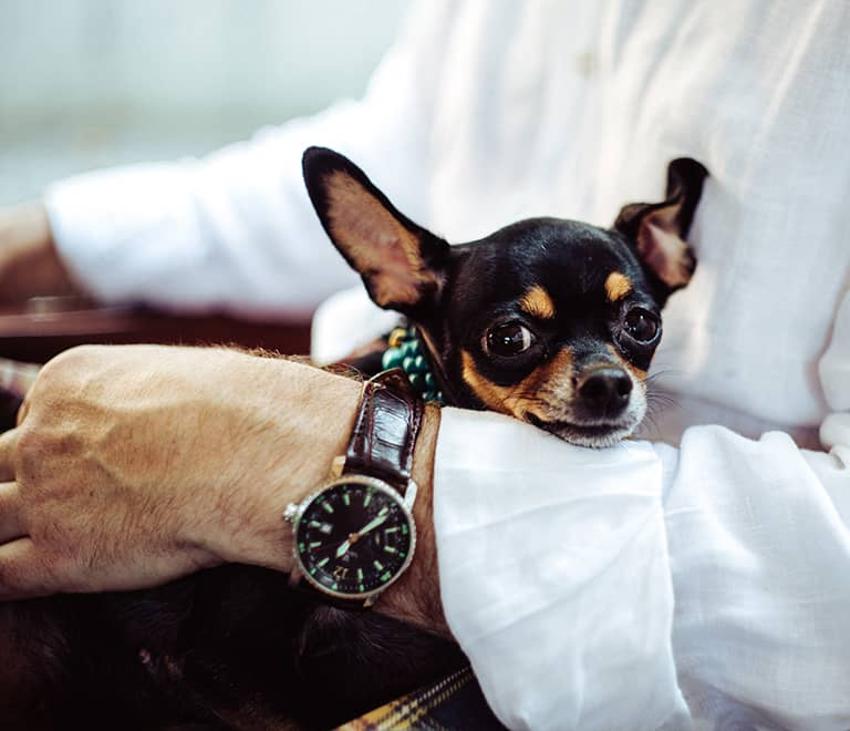 Residencia Matacas taller terapia con perros